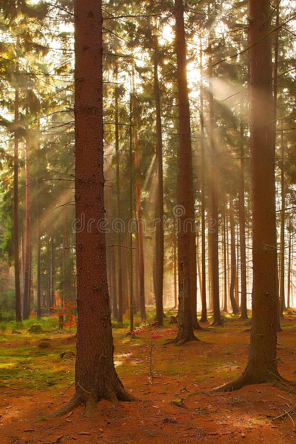 Solar beams through foliage. stock image