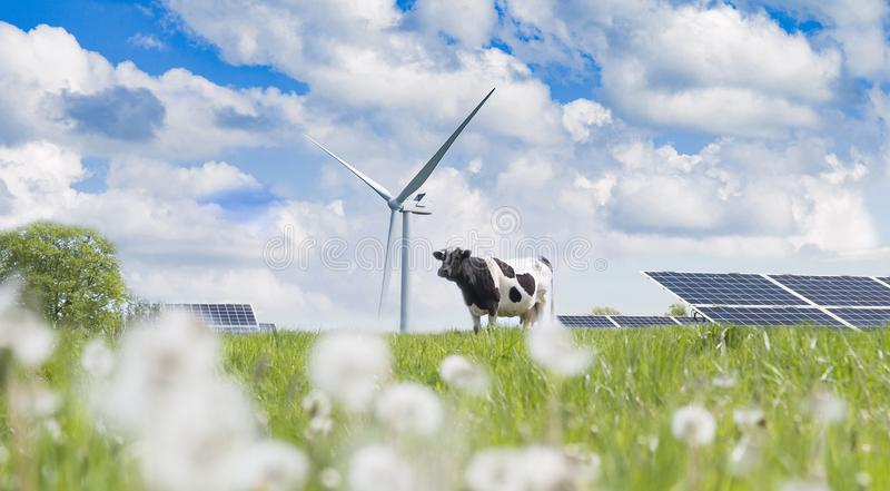 Solar cell and cow stock photography