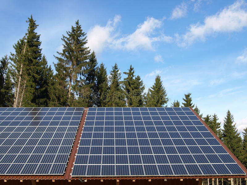 Solar cells. Conifer trees and blue sky stock images