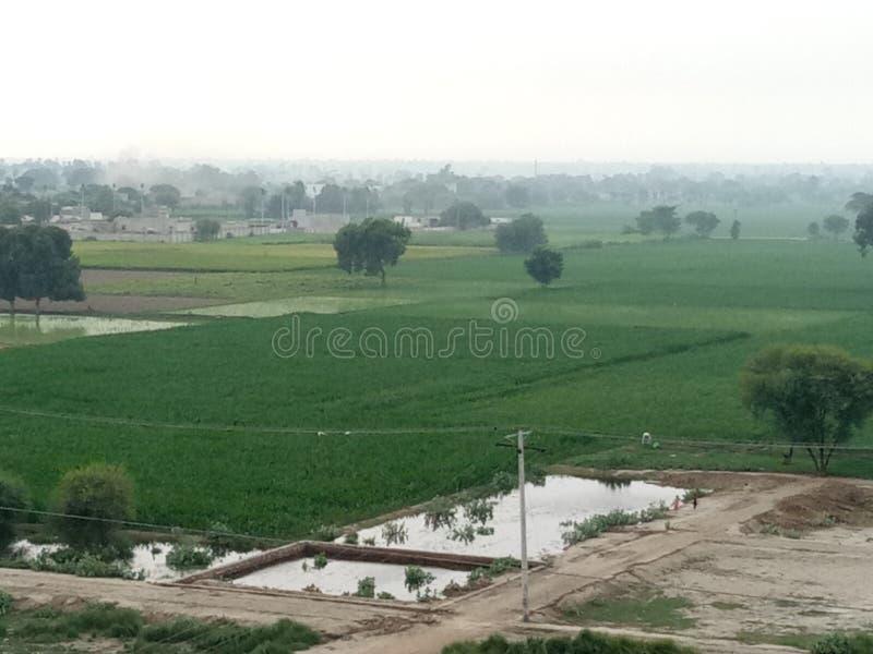 Solar de Paquistão, mostrando o uso de tiras do campo imagem de stock