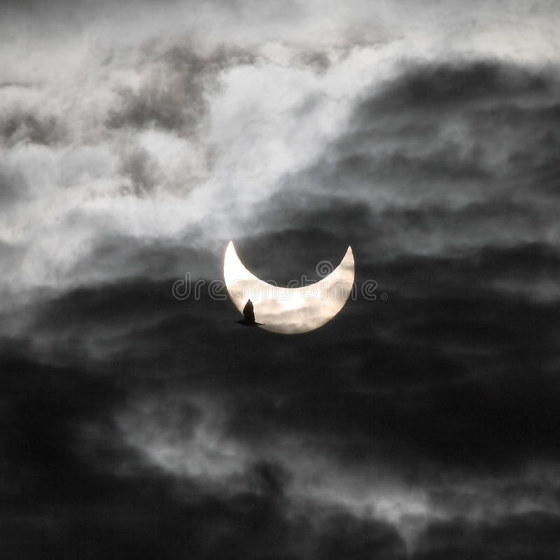 Download Solar eclipse and bird editorial stock photo. Image of italy - 17663433