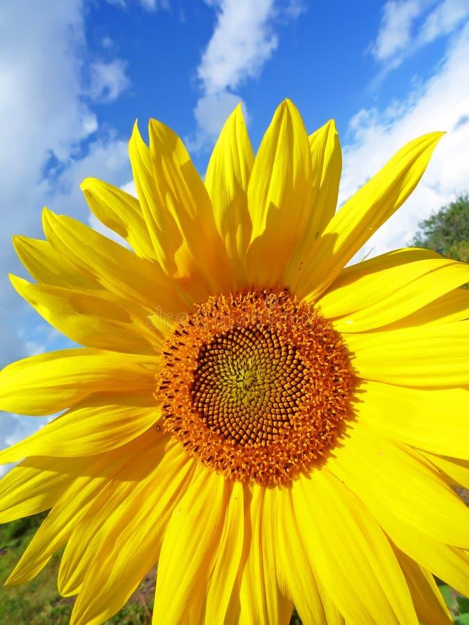 Solar flower in the sky stock image