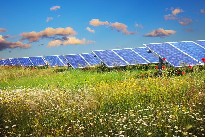 Solar panels under blue sky on field of flowers stock image