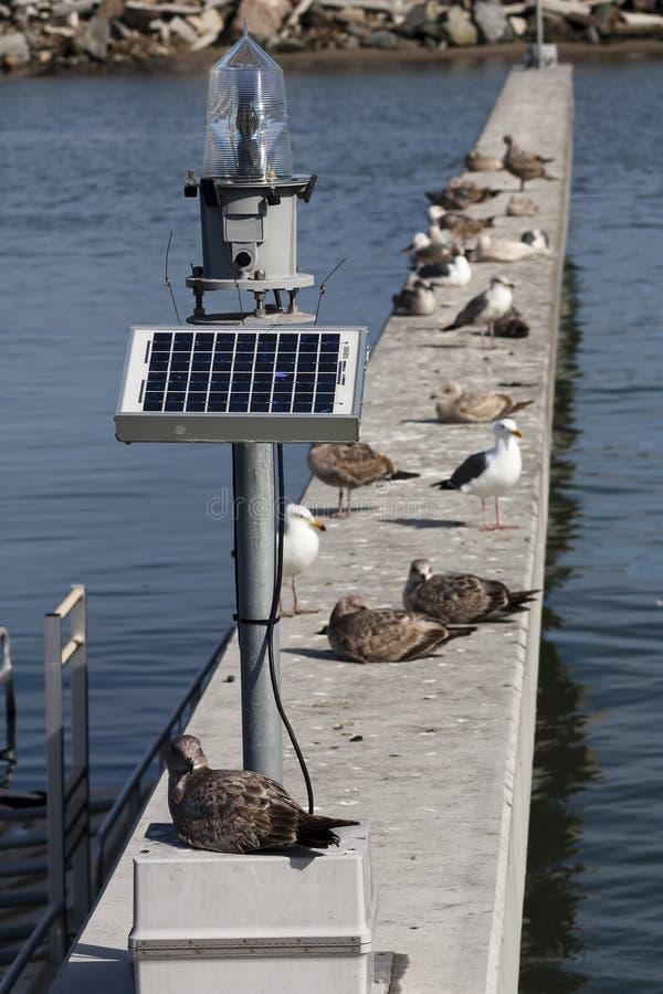 Solar Powered Marine Lantern Daytime Marina Seagulls stock photo