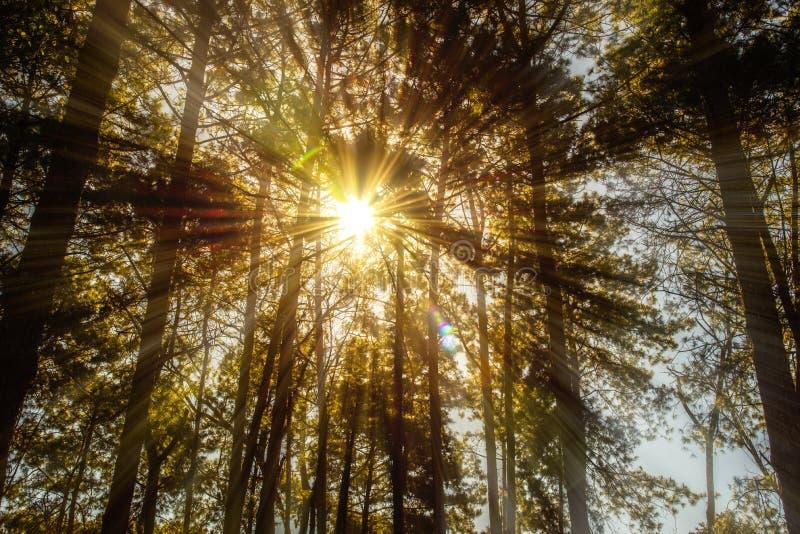 Solar sobreviva às árvores imagem de stock