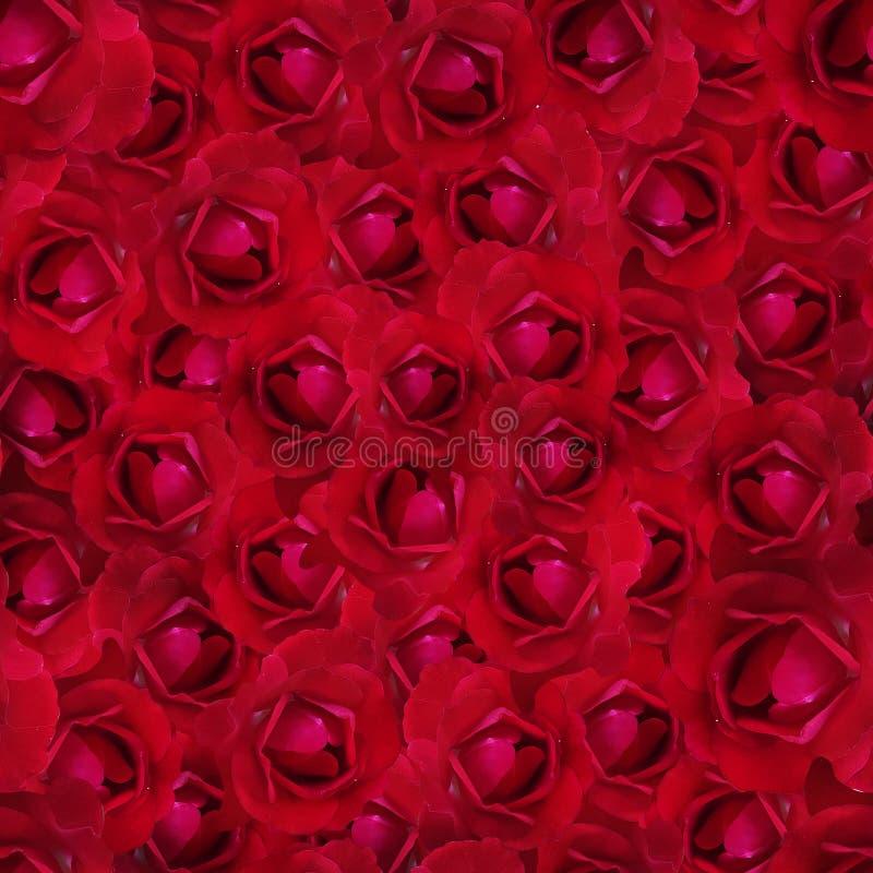 Solas diversas flores de la hortensia en el fondo blanco fotos de archivo libres de regalías