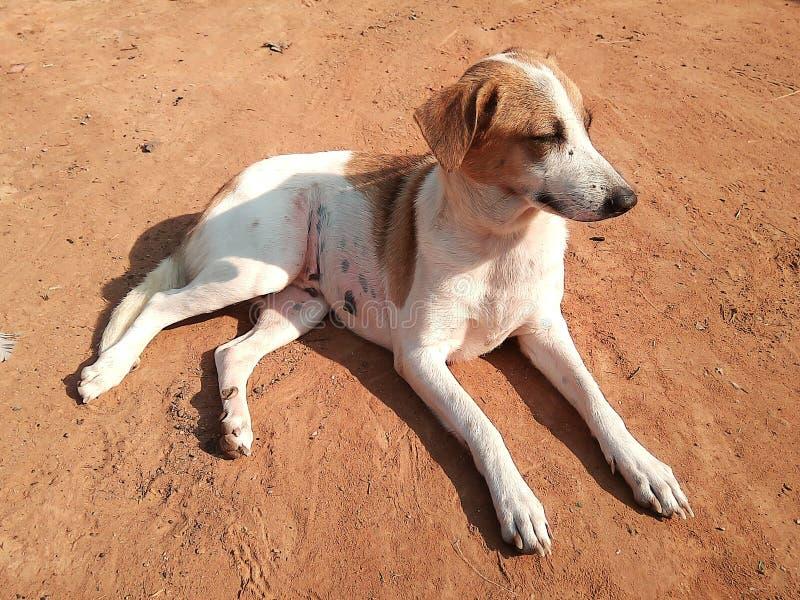 Solbada för hund arkivbild