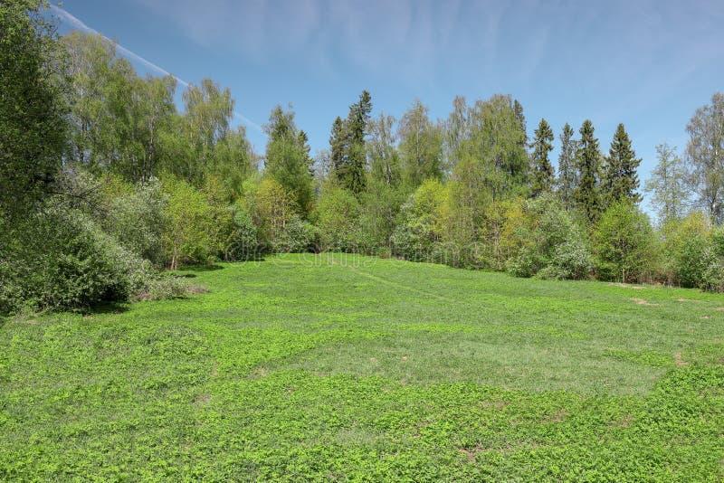 Solbelyst bana till och med ängen till kanten av de körsbärsröda träden för för vårskog och blomning arkivbild