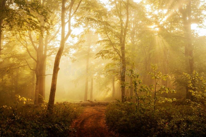 Solbelyst skog i morgonen royaltyfri bild