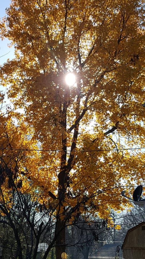 Solbelyst träd fotografering för bildbyråer