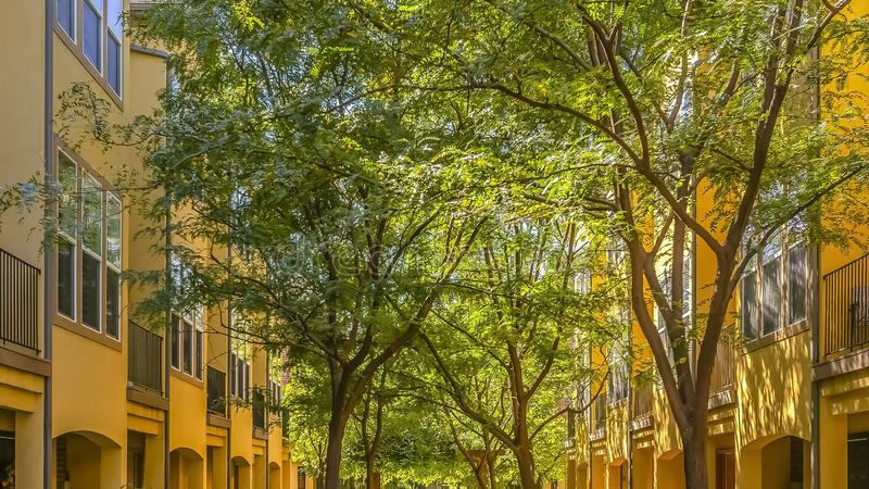 Solbelysta bostads- byggnader och frodiga träd arkivbild