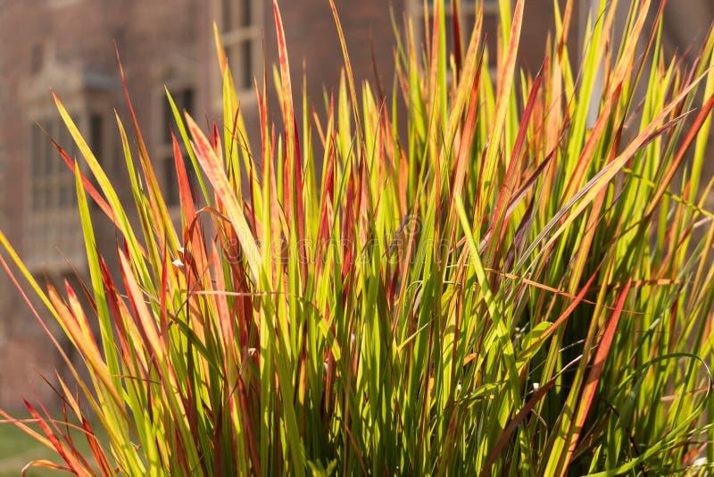 Solbelysta gräs framme av en historisk byggnad royaltyfri foto
