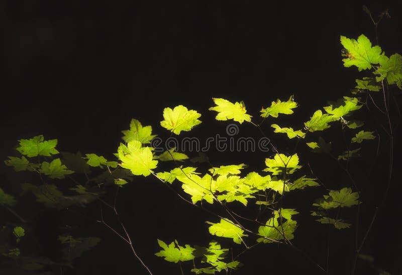 Solbelysta sidor i Mt Hood National Forest royaltyfri fotografi