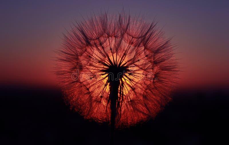 Solblomma arkivfoto