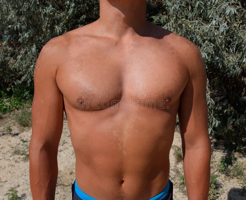 Solbränna på huden av bröstkorgen och magen av en man Exfoliation hud skalar av Farlig solbränna royaltyfria foton