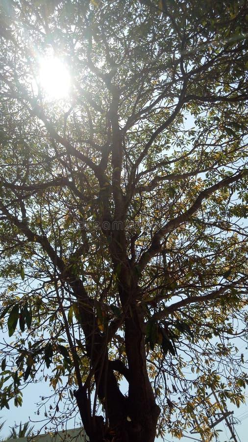 Solbris fotografering för bildbyråer