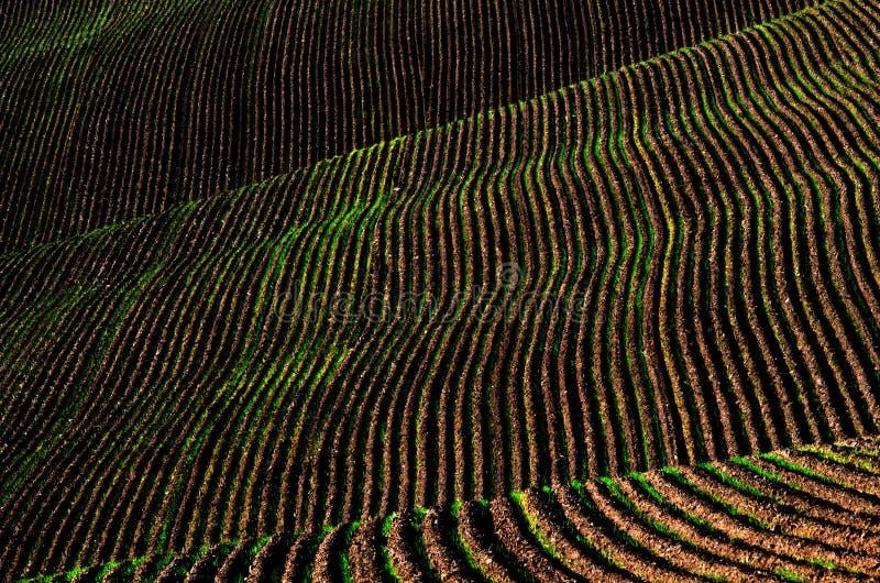 Solchi a terra arati della sporcizia del campo dell'azienda agricola pronti per piantare fotografie stock libere da diritti