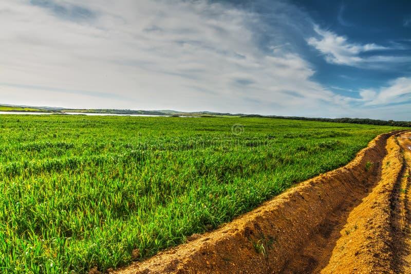 Solco in un campo verde immagini stock libere da diritti