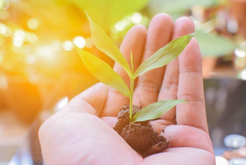 Soldi di risparmio dai piccoli alberi fotografia stock