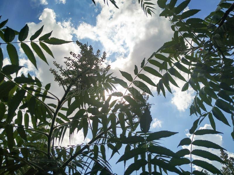Sole attraverso le nuvole e le piante fotografie stock libere da diritti