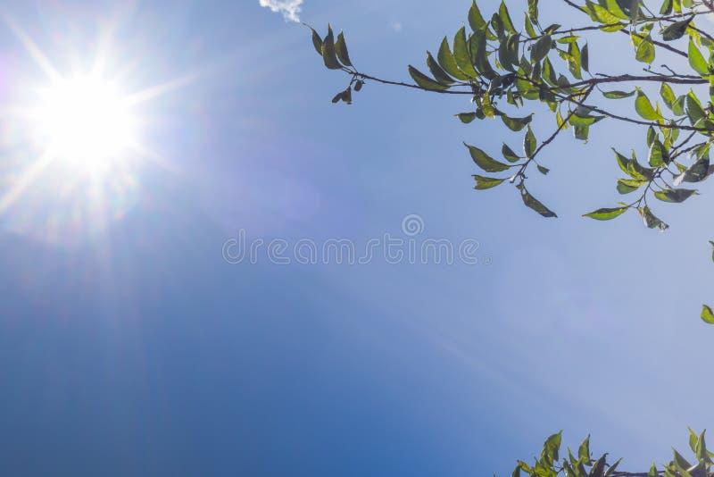 Sole brillante in chiaro cielo blu con il ramo di albero Spazio della copia con il contesto della natura fotografia stock