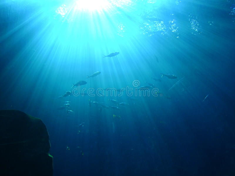 Sole brillante sotto l'acqua fotografie stock libere da diritti