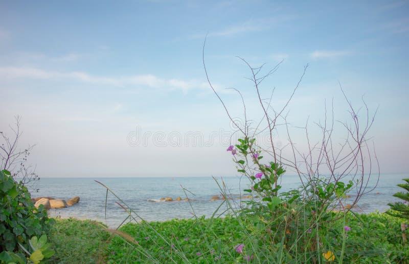 Sole del fiore del mare fotografie stock