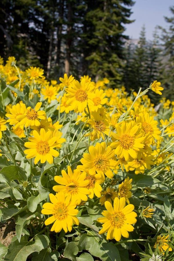 Sole dell'Oregon fotografie stock