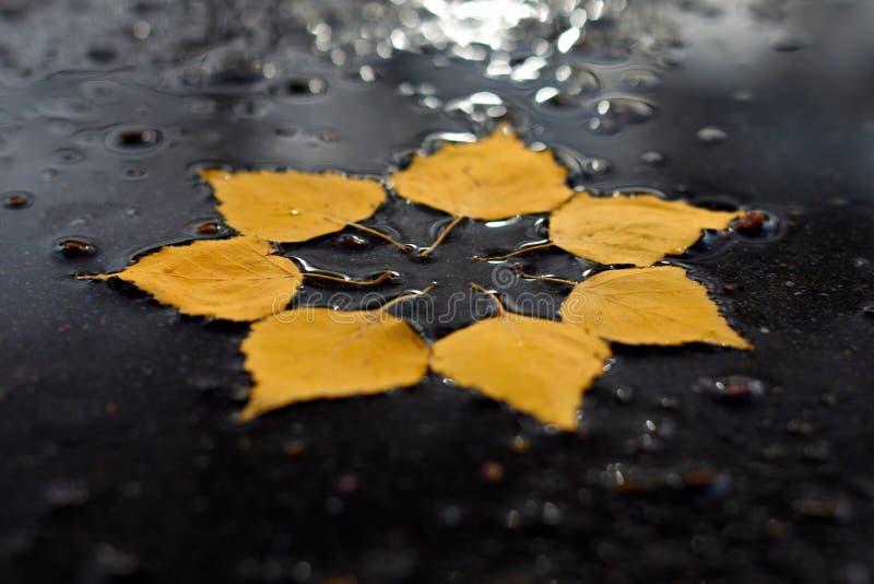Sole di autunno nella pozza fotografie stock libere da diritti