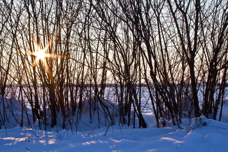 Sole di inverno che attraversa l'albero nudo in neve fotografia stock