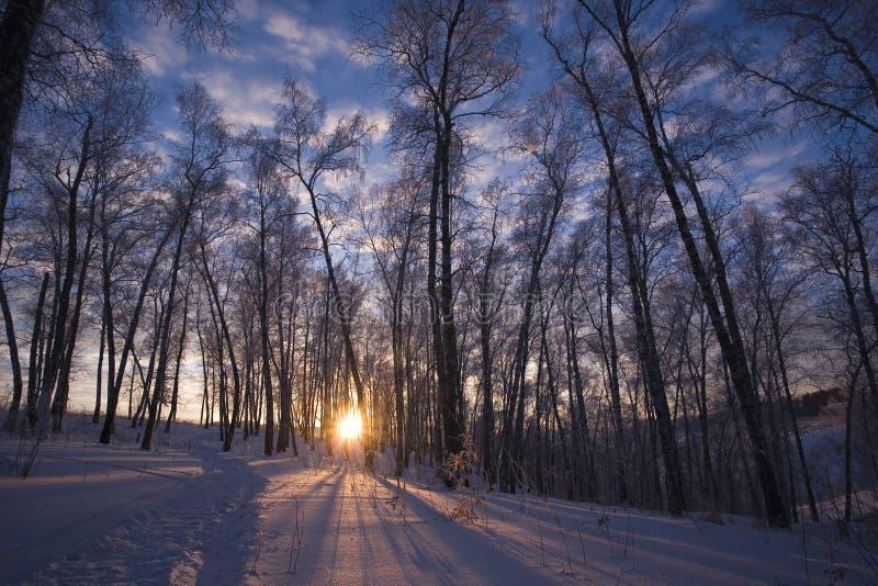 Sole di inverno in Siberia immagine stock
