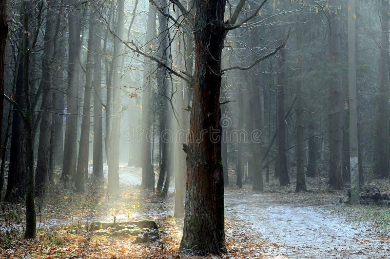 Sole di novembre fotografie stock