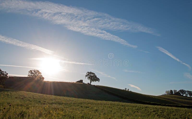 Sole di primo mattino che splende accanto alla quercia della valle sulla collina nel paese di vino di Paso Robles nel Central Val immagine stock libera da diritti