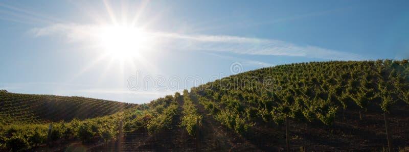 Sole di primo mattino che splende sulle vigne di Paso Robles nel Central Valley di California U.S.A. fotografia stock libera da diritti