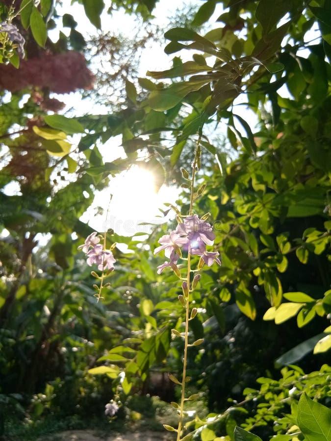 Sole e fiori fotografia stock libera da diritti