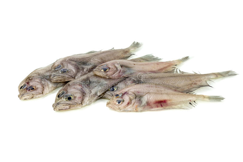 The sole fish. Raw fish sole on a white background closeup stock photo