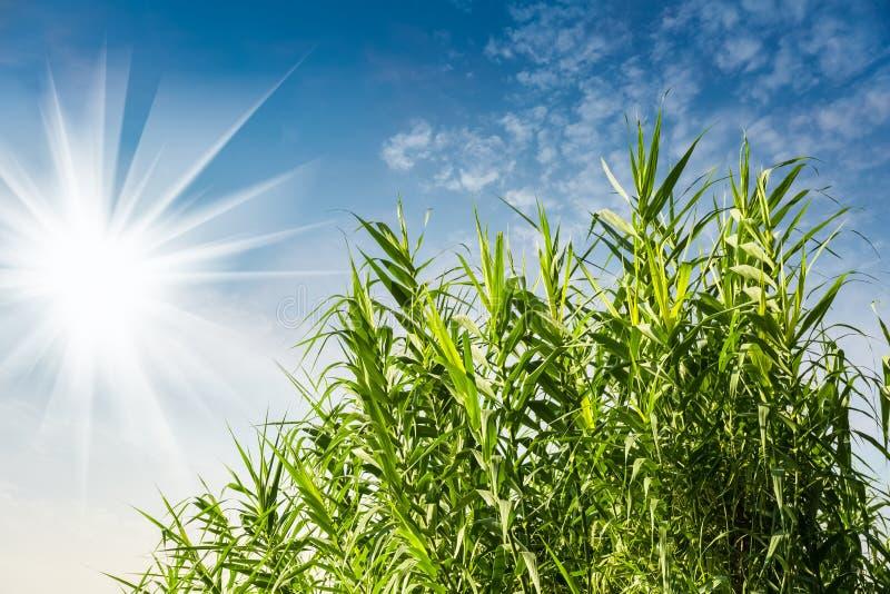 Sole luminoso ed erba verde fresca immagine stock libera da diritti