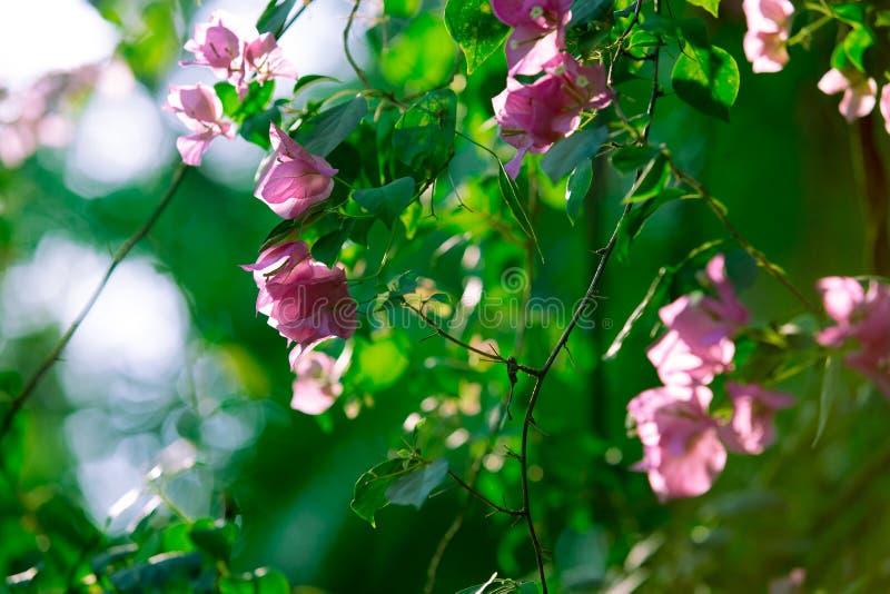 Sole nel giardino immagini stock libere da diritti