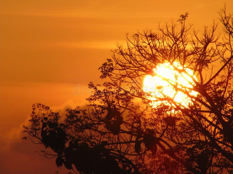 Sole perfetto di mattina in Indonesia fotografia stock