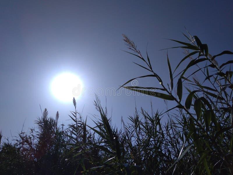 Sole radiante immagini stock