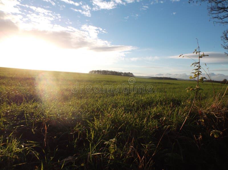 Sole sopra il bosco ceduo ed il campo fotografia stock