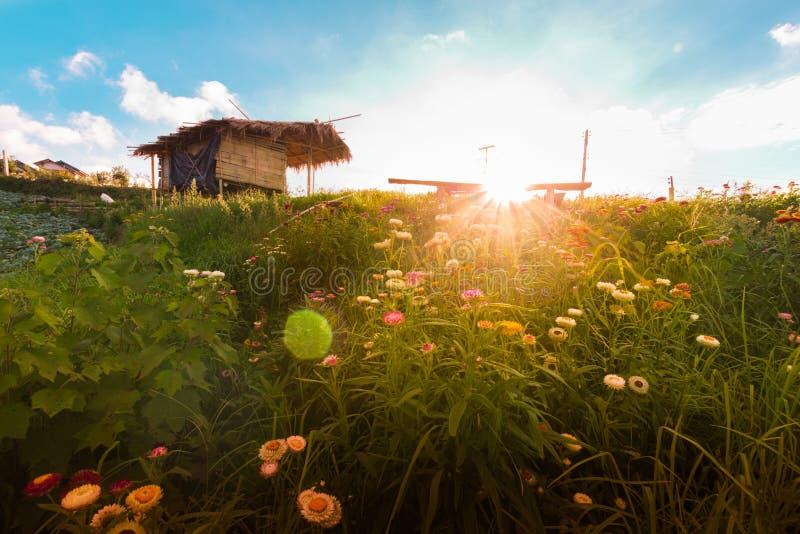 Sole Tailandia del fondo delle montagne del fiore fotografia stock libera da diritti