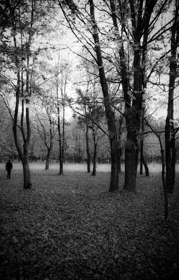 Soledad Werwolf fotos de archivo