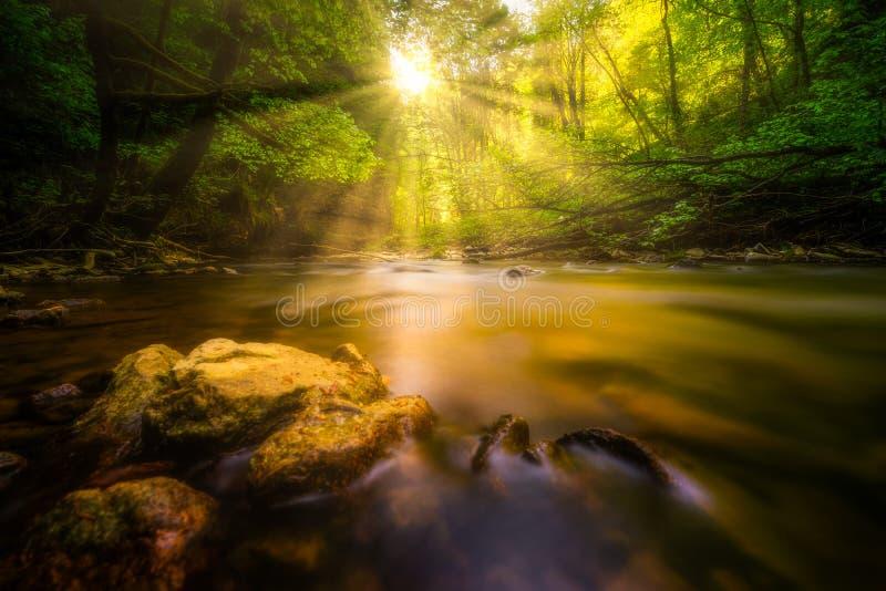 Soleil à une rivière dans la forêt images libres de droits