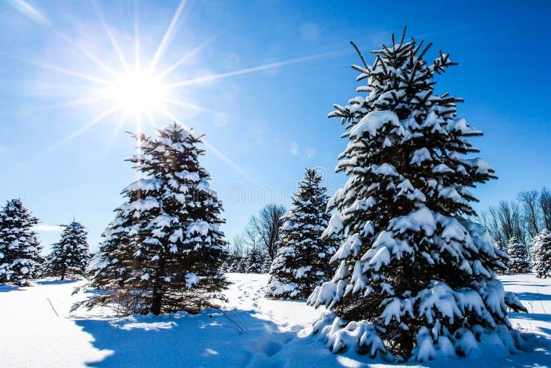 Soleil d'hiver photos libres de droits
