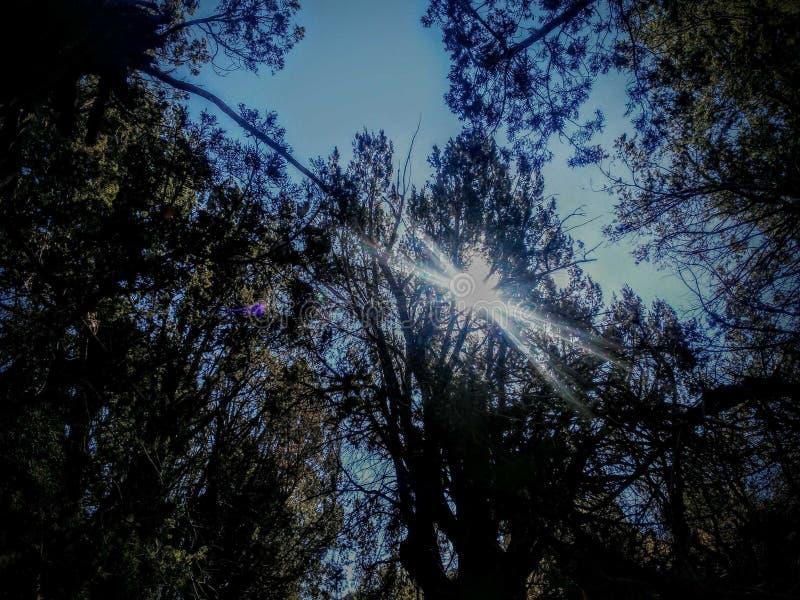 Soleil de canyon de boîte photo libre de droits
