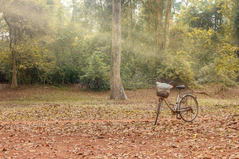 Soleil de soirée au paysage en bois et à une bicyclette images stock