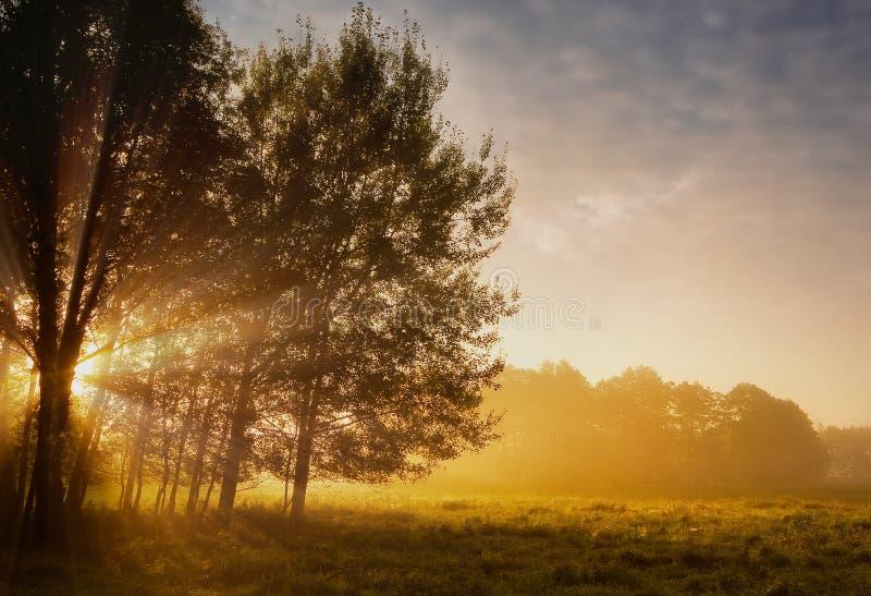 Soleil Levant dans la forêt et le pré images libres de droits