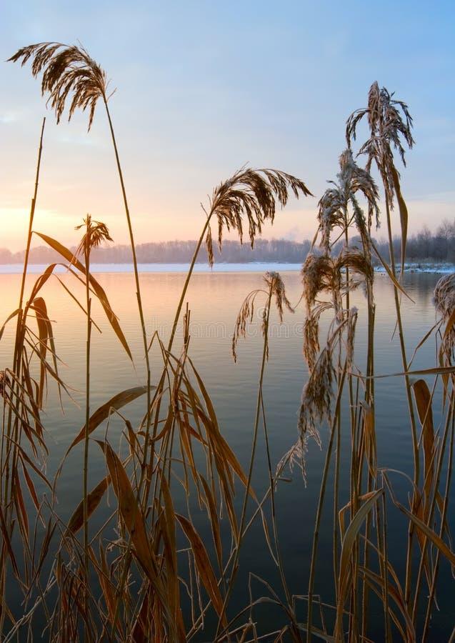 Soleil Levant de rayons frais de matin de canne photo stock