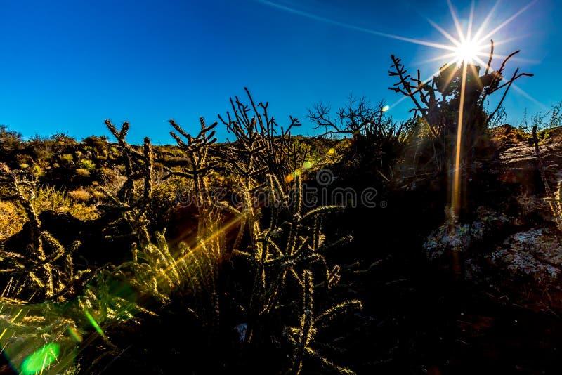 Soleil Levant sur un paysage de cactus photos libres de droits